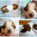 female 2 - 2 weeks kopia