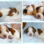 female 3 - 2 week kopia